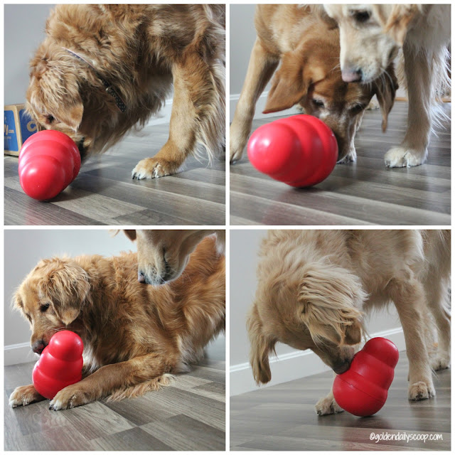 dogs playing with the kong wobbler interactive dog toy
