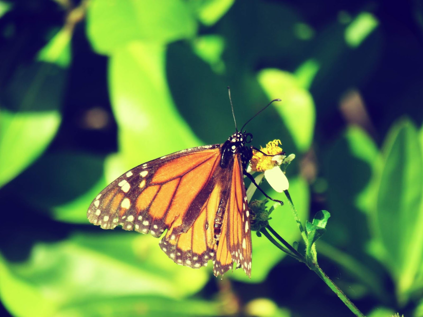 Butterfly Fairy Queen and Moon Ritual on Green Plants in Nature