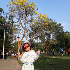 Raline di bawah pohon Tabebuya Alun-alun Kota Malang