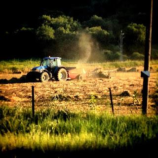 Me duele ver como progreso, con sus tractores y sus venenos, está convirtiendo Andalucía en una Nueva Africa.