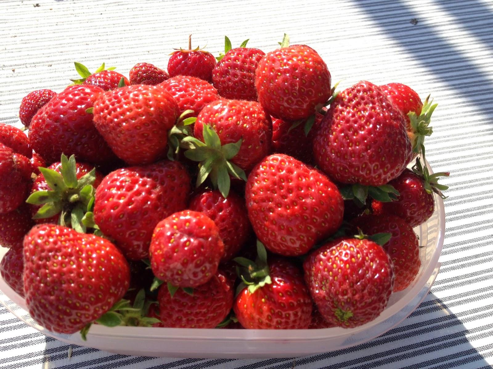 jord til jordbær