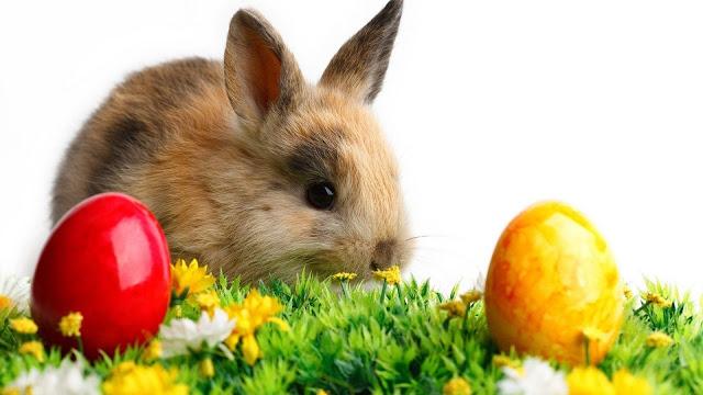 Best Happy Easter pics