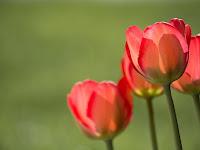 True Spring vs. Bright Spring: An In Depth Comparison.
