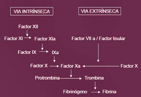 Diagrama de flujo de la vía extrínseca e intrínseca de la coagulación sanguínea