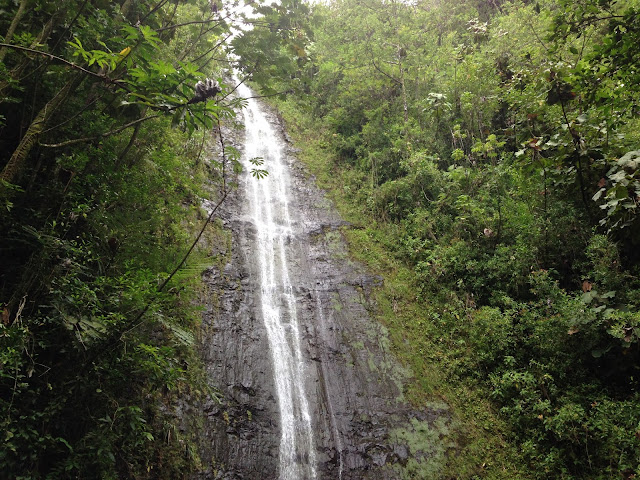 Manoa Falls Hike | Honolulu, Hawaii