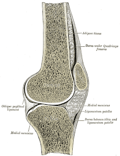 Patella-Tendonitis-Its-Causes-And-Treatments