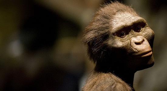 Kematian Lucy Australopithecus afarensis Akibat Terjatuh dari Pohon