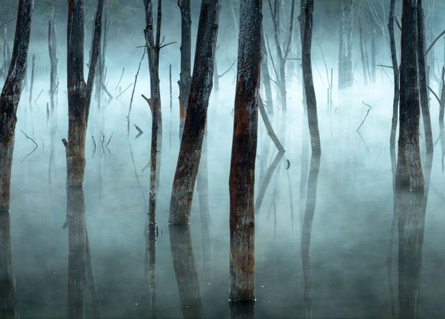 Buổi sáng mờ sương tại hồ Cuejdel, Rumani. AmyPrint
