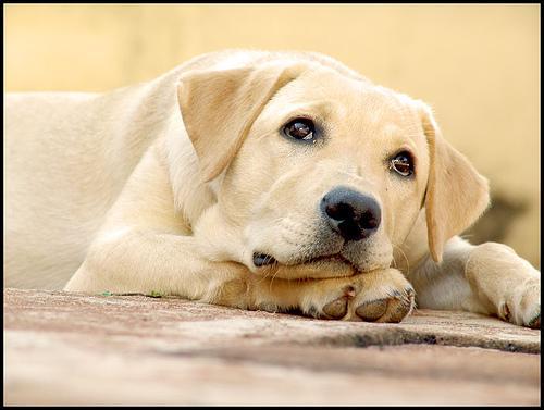 adopt a pet  Doenças do Cães Sintomas e Tratamento