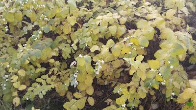 białe kulki do strzelania, rośliny, zdjęcia, fotografie, jesień, jesiennie