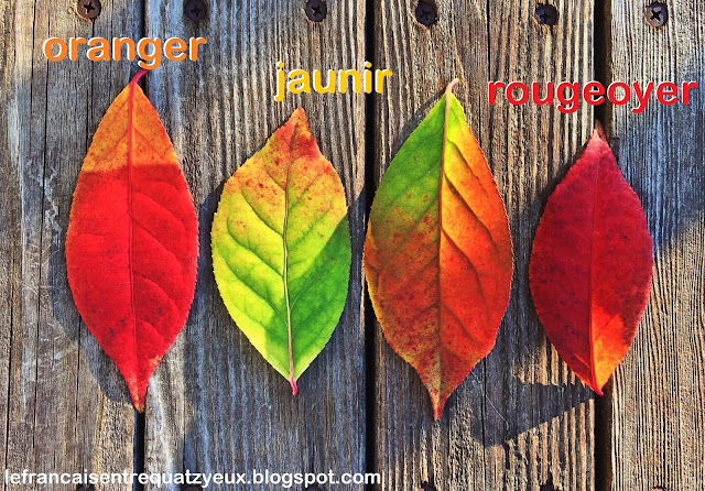 leaves feuilles fall automne couleurs french vocabulary rougeoyer