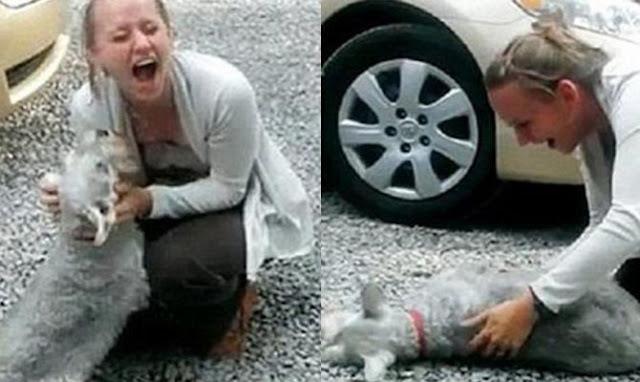 Σκύλος λιποθυμάει από την χαρά του όταν γύρισε σπίτι η ιδιοκτήτριά του μετά από 2 χρόνια – Ό,τι πιο γλυκό είδαμε