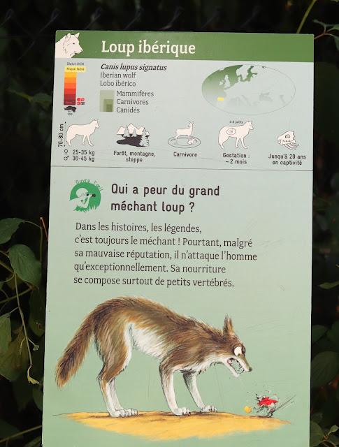 loup du zoo de vincennes