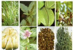 Aneka tanaman obat di Indonesia