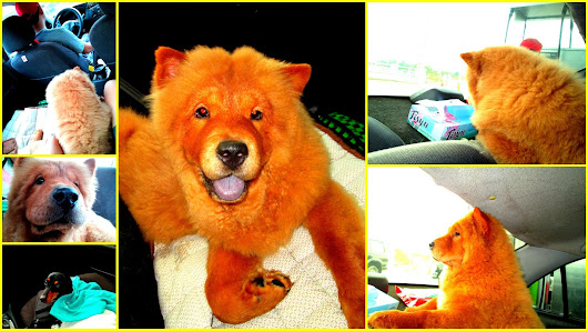 Doggie's Day Out:Dog Wash & Dash at Alabang Town Center