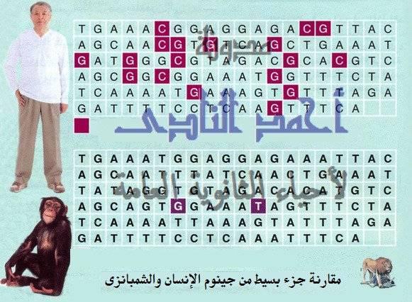 الجينوم البشرى - مقارنة الجينومات - مدونة أحمد النادى لأحياء الثانوية العامة