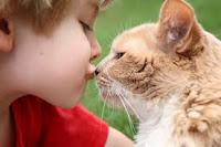 Kucing Salah Satu Penyebab Alergi pada Anak