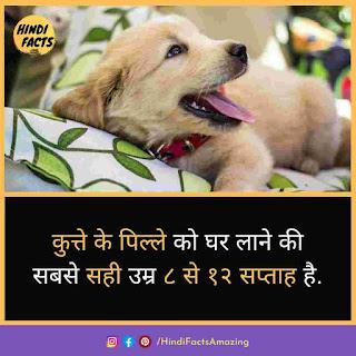 dog in hindi