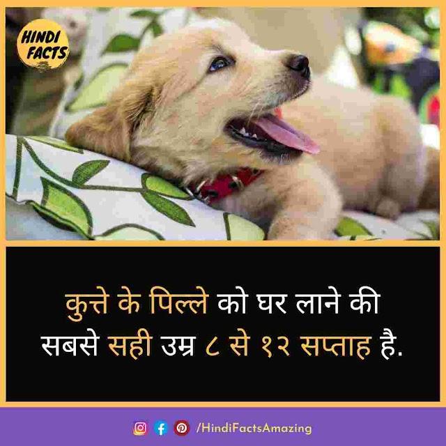 Dog in Hindi - कुत्तो की जानकारी और रोचक तथ्य