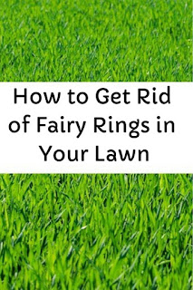 How to Get Rid of Fairy Rings in Your Lawn