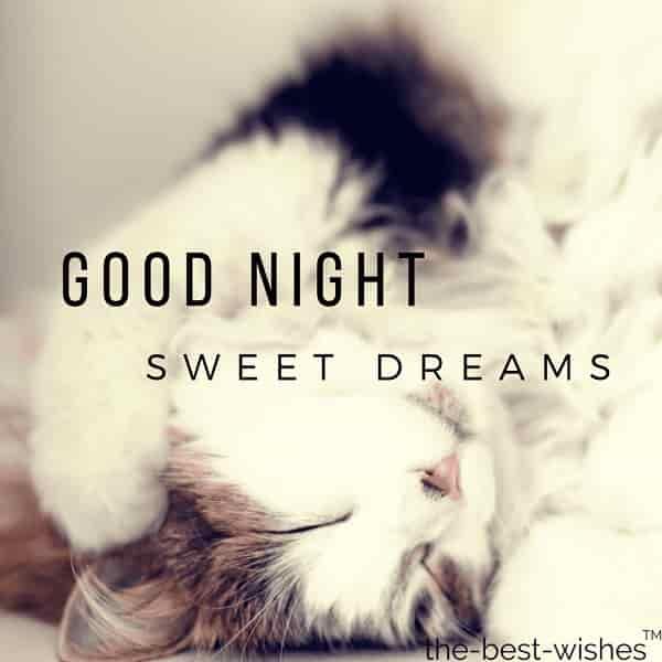 cute good night funny cat sleeping image