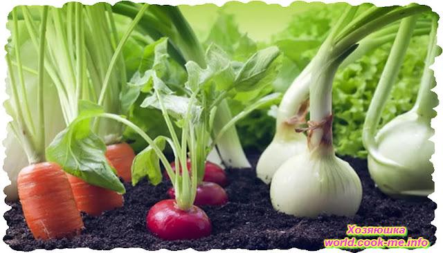 Какие растения посаженные рядом приносят пользу друг другу !