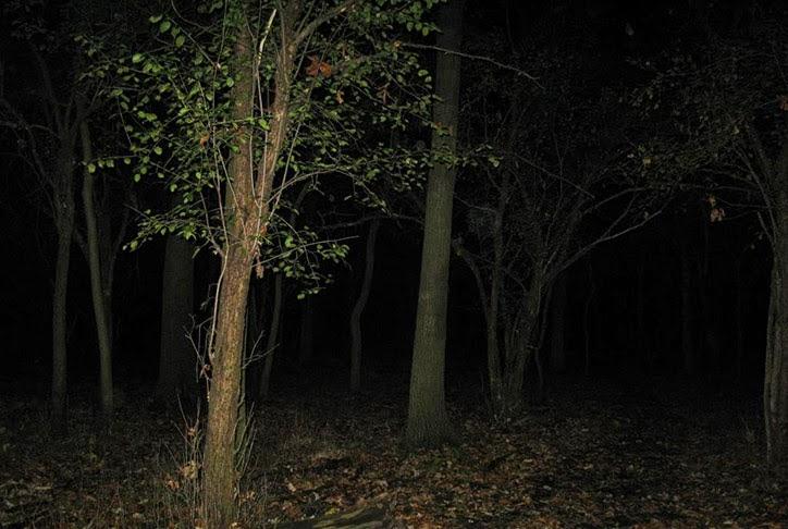 fantasmas, assombrados, florestas assombradas, bosques assombrados, macabro, terror, medo