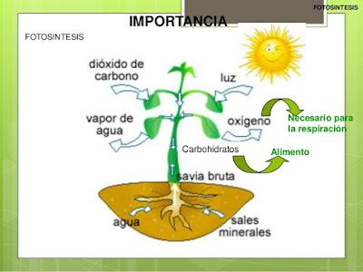 Resultado de imagen de fotosíntesis