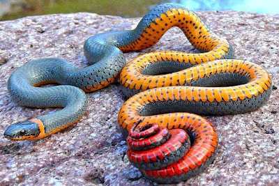 Snakes facts and information
