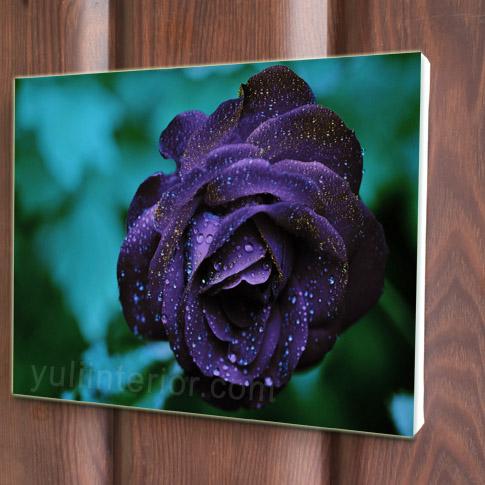 Purple Roses Canvas Art, Print in Port Harcourt, Nigeria