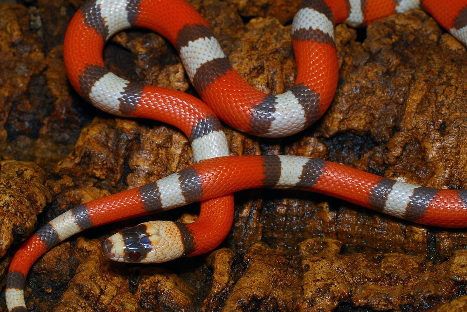 The Most Beautiful Snakes In The World - ΤΑ ΟΜΟΡΦΟΤΕΡΑ ...
