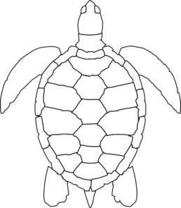 early play templates: Turtle templates
