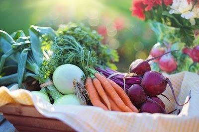 Panen Urban Farming