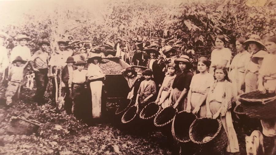 Conheça a origem do café e sua história