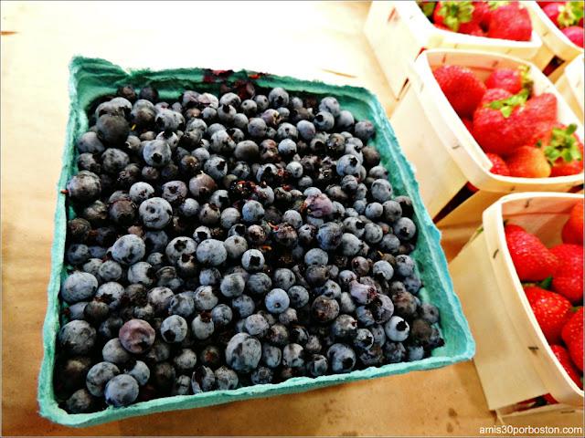 Applecrest Farm Market: Arándanos Silvestres de Maine