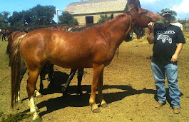 Jay's heart horse, Copper Casanova