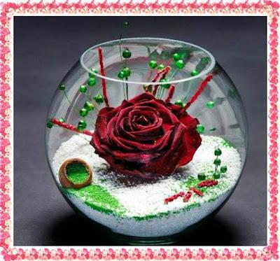 pareri trandafiri stabilizati alternativa trandafiri criogenati