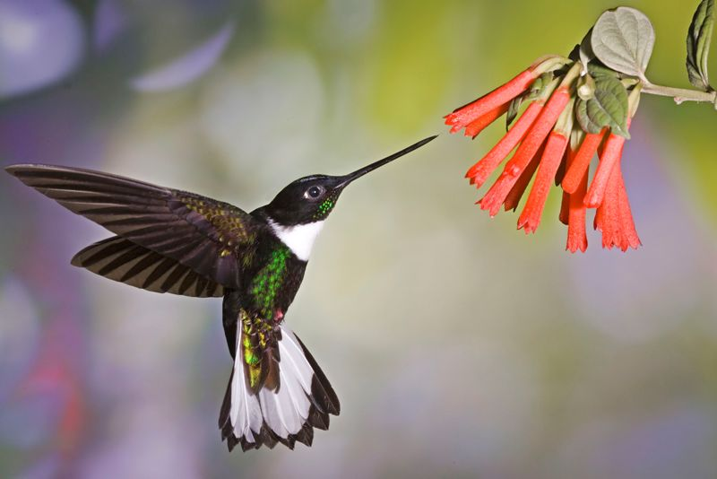 Aviturismo en Ecuador