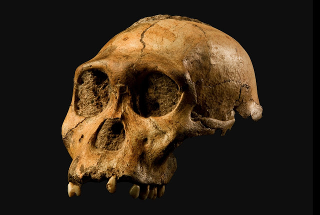 Australopithecus sediba: No such thing as a missing link