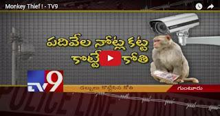 Monkey Thief ! -
