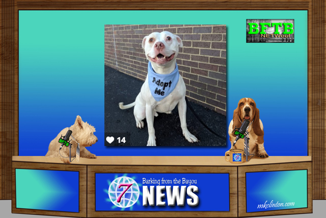 BFTB NETWoof News set with two dog anchors