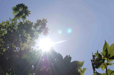 sol genom ett lövverk