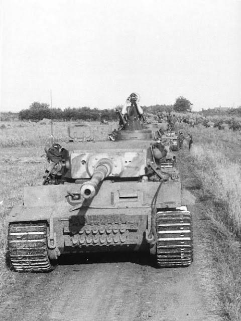 Tiger «333»