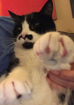 Photo of Oreo. I'm holding her paw out.