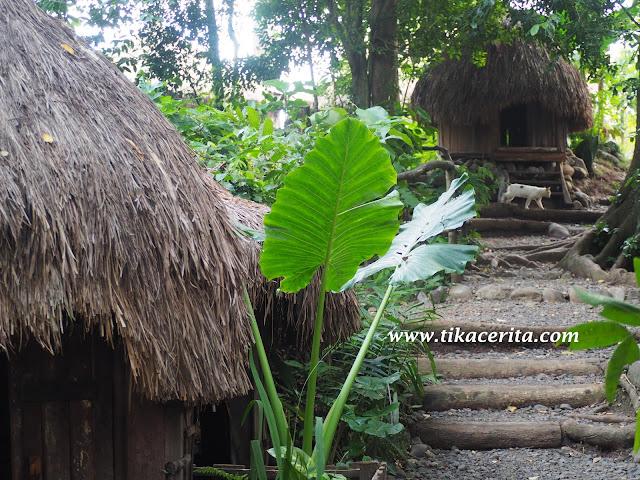 tempat wisata di banyuwangi www.tikacerita.com