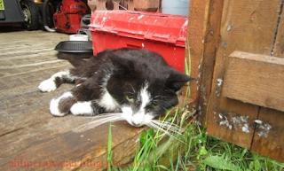 Kenali Penyebab Kucing Kesayangan Anda Semakin Kurus dan Lemas