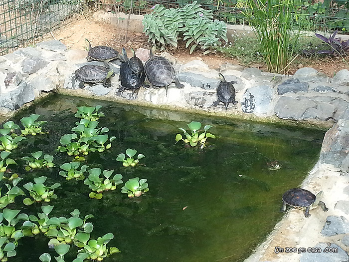 Un zoo en casa julio 2017 for Estanques de agua baratos
