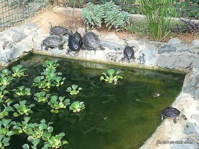Estanque para tortugas