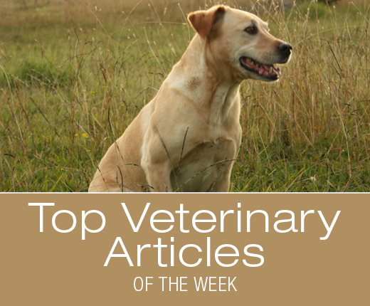 Top Veterinary Articles of the Week: Foxtail Injuries, Sunscreen after Surgery, and more ...