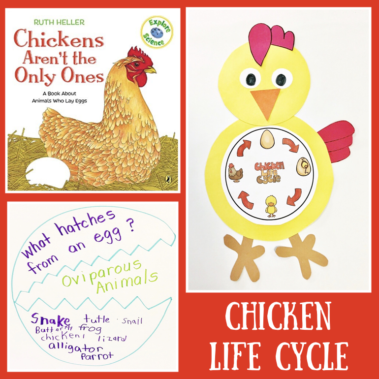 Image of: Viviparous Animal Life Cycle Oviparous Animals Firstieland Animal Life Cycle Oviparous Animals Firstieland